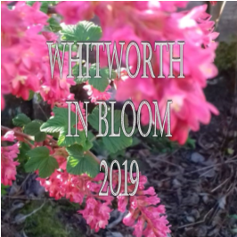 Whitworth in Bloom 2019